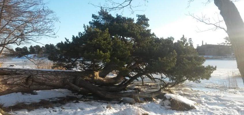 Pro  Karhusaari – Yhdessä Karhusaaren puolesta